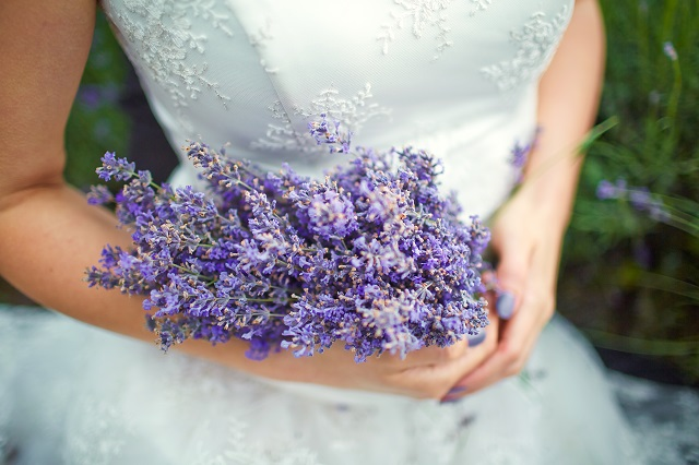 Lavender bouquet in hands of the bride.