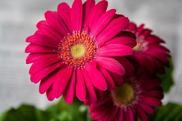 flower-620395_640