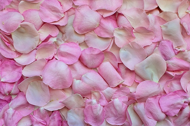 rose-petals- pho by jill111 on pixabay