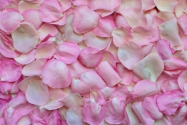 rose-petals- pho by jill111 on pixabay