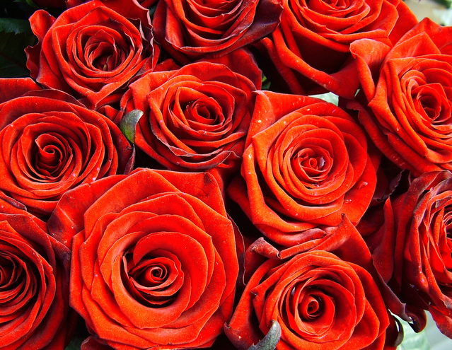 red-roses-1566325-639x495